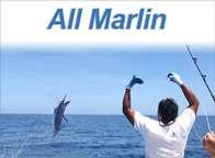 All Marlin