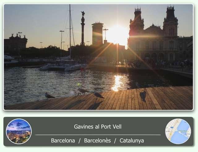 Gavines i posta de sol