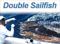 Double Sailfish