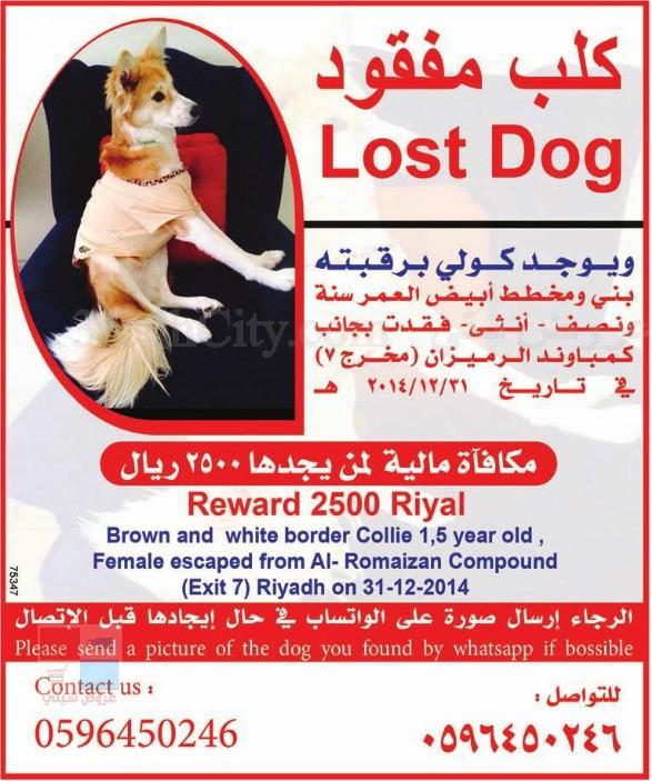 2500 ريال لمن يجد كلب مفقود في الرياض XWNSh0.jpg