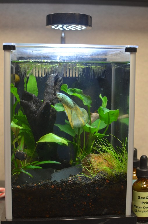 Planting in a 2 5 gal tank page 3 betta fish and betta for 3 gallon fish tank for betta