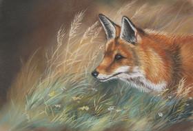 dierenschilderij vos