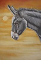 dierenschilderij ezel