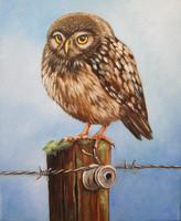 dierenschilderij opdracht olieverf uil