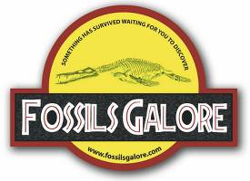 Fossils Galore Discussion