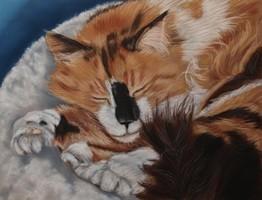 kattenschilderij opdracht schilderij kat