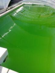eau verte piscine desjoyaux d sespoir piscines filtration. Black Bedroom Furniture Sets. Home Design Ideas