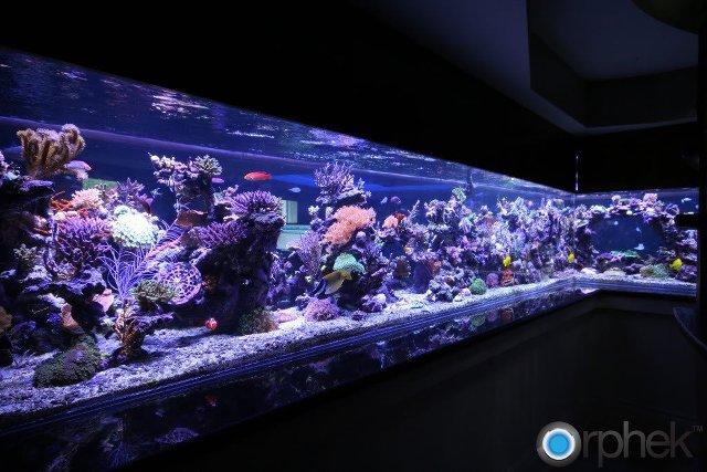 Lampada tubo neon led rgb multicolore 45 cm acqua acquario for Lampada acquario