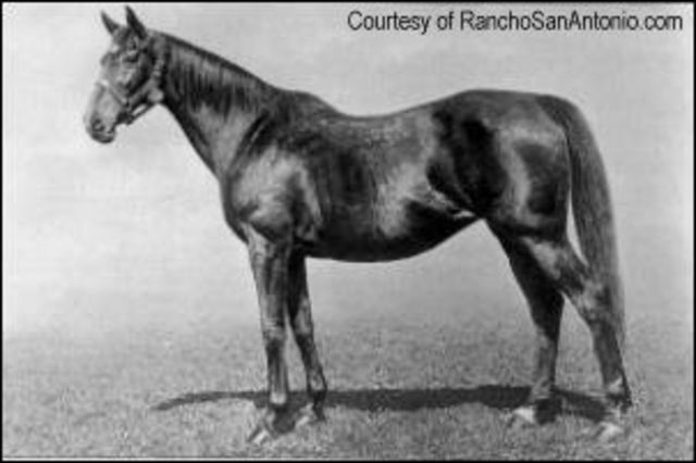 thoroughbred horse pedigree query