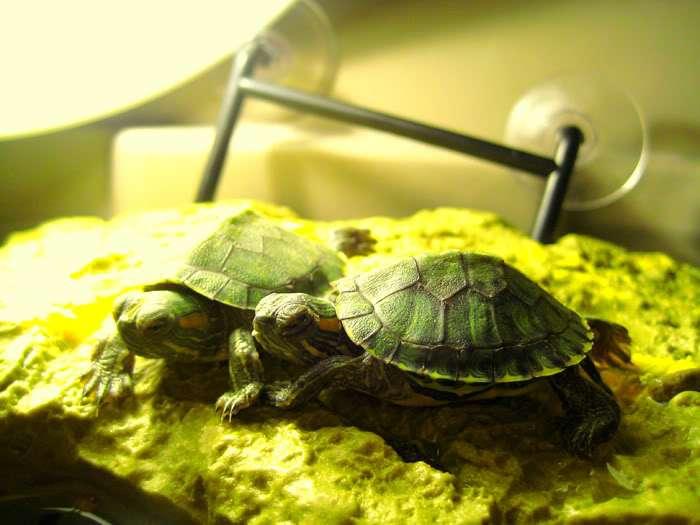 Lampada rettili tartarughe terrario animali luce solare for Accessori terrario tartarughe
