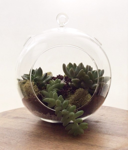 succulents-suculentas-terrario-terrarium
