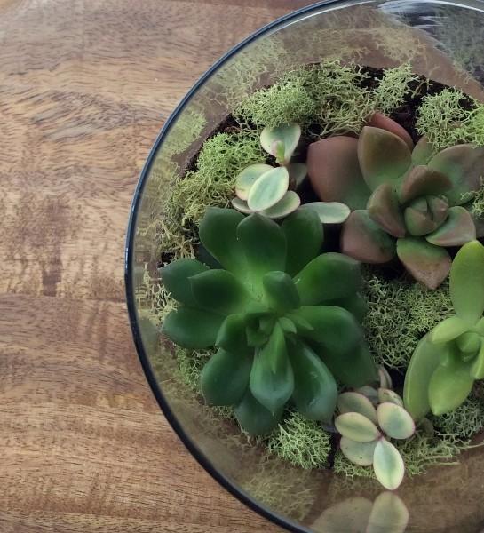 terrario-suculentas-terrarium-succulents