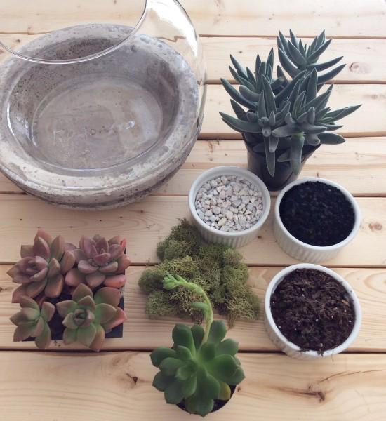 terrario-terrarium-suculentas-succulents