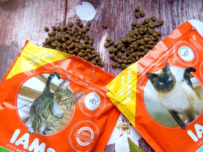karma sucha najlepsza dla kotów