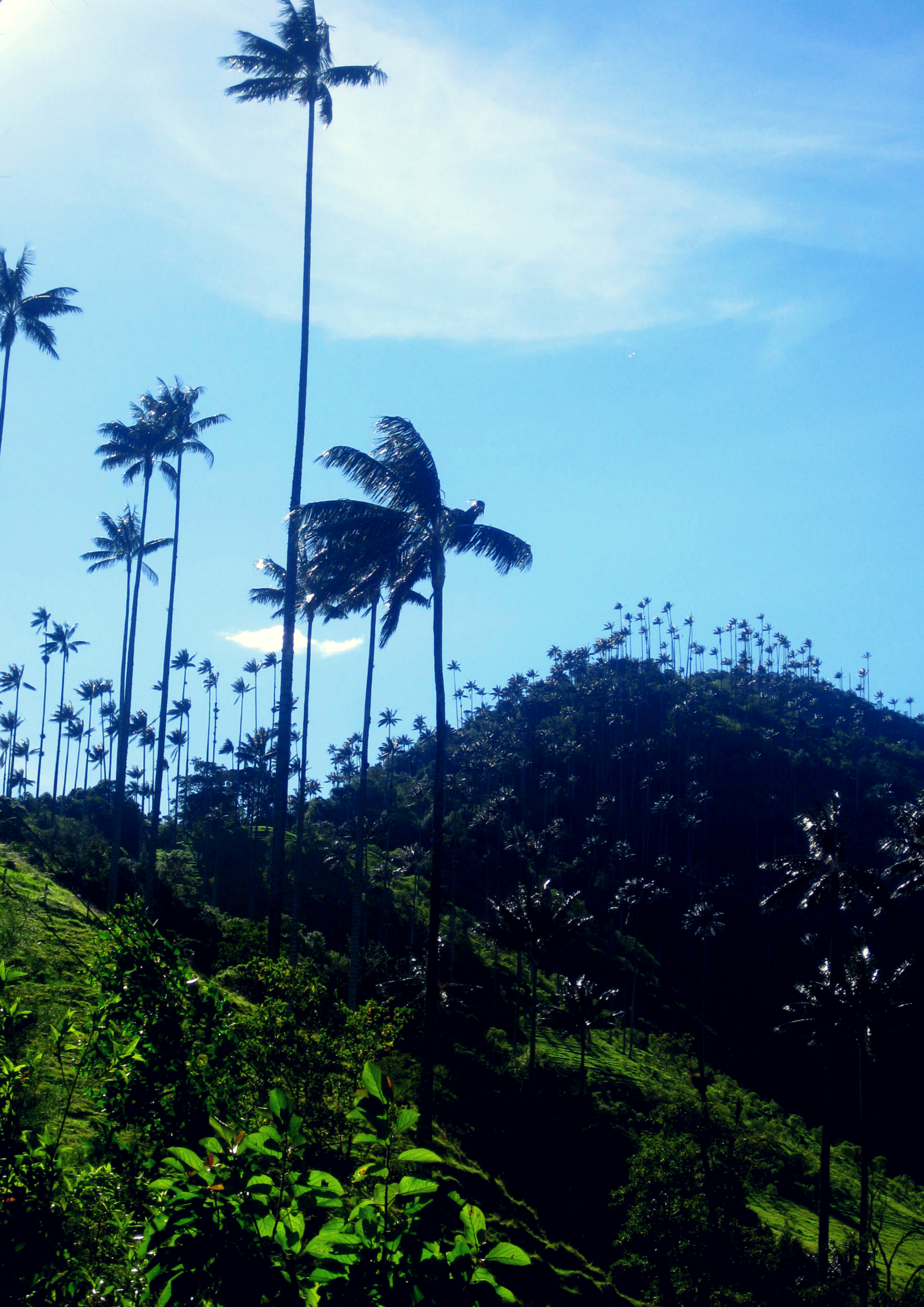 #ExploretheElements Earth Entry, Valle de Cocora, Colombia