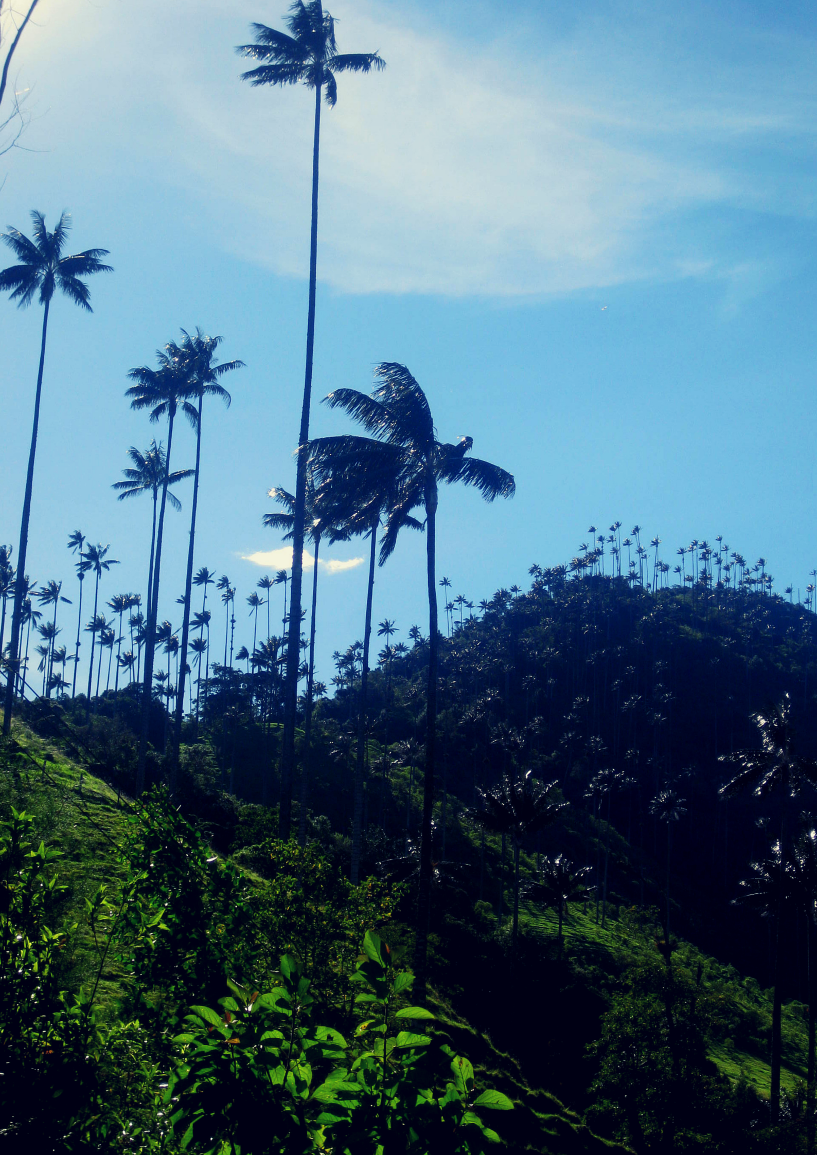Valle de Cocora, Colombia. My 5 favourite places in Colombia   Todd's Travels.