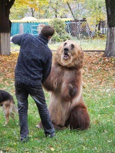 Медведь в домашних условиях фото