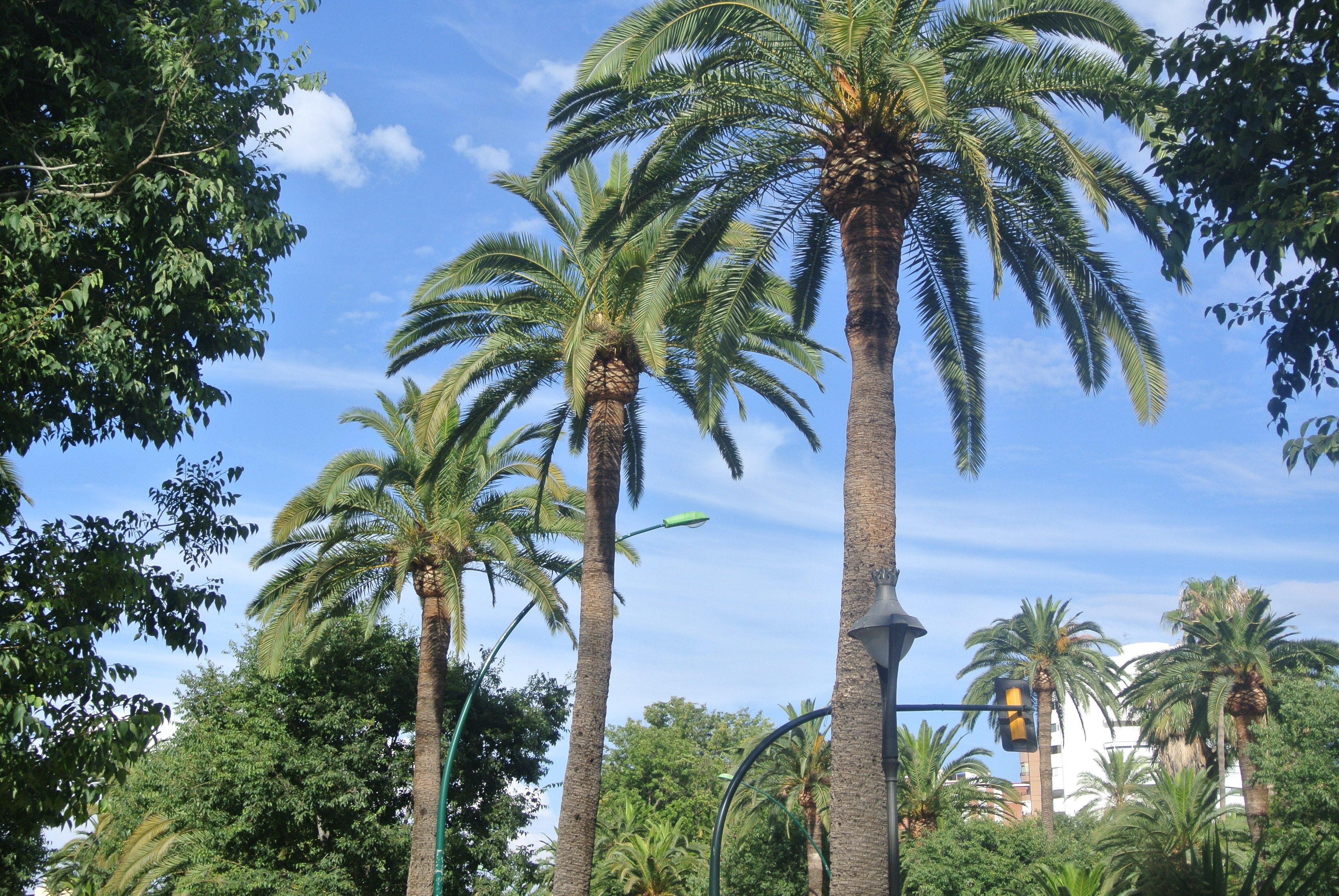 Malaga, Spain | Todd's Travels Travel Blog