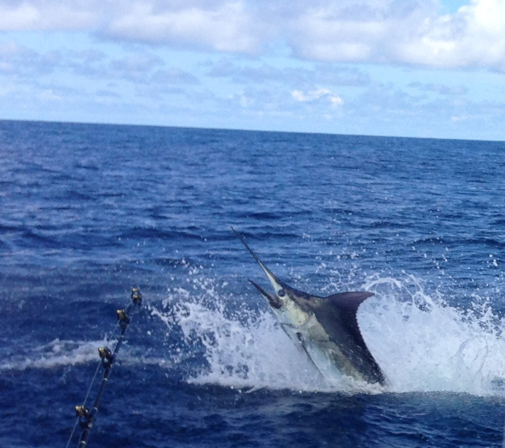 marlin hook up To nod off repeatedly when tired in a motion resembling hooking a fish, namely, a  marlin originated in lompoc, ca.