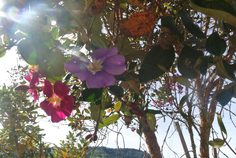 Las flores coloridas y bonitas en Jardín, Antioquia, Colombia