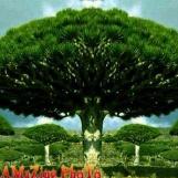 AMaZIng PhoTo ✅