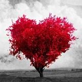 amor em imagens