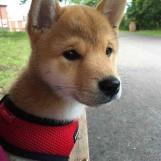 Dog Pics Bot