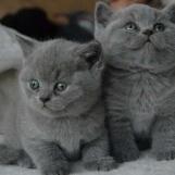 Kittens Bot