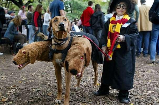 Déguisement de Harry Potter et Cerbère