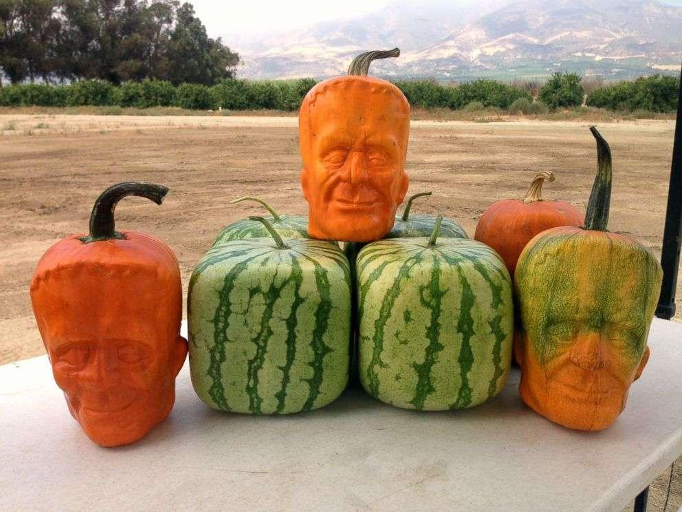Citrouilles pour Halloween en forme de Frankenstein