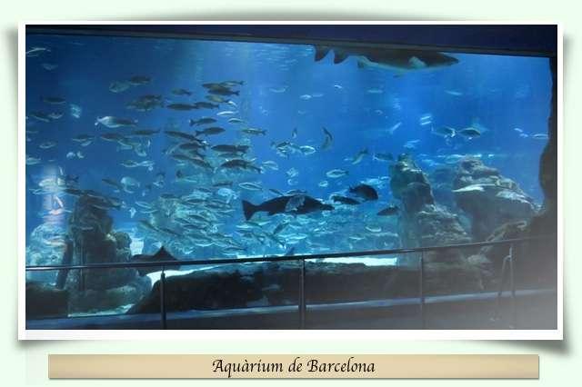 Aquàrium Barcelona