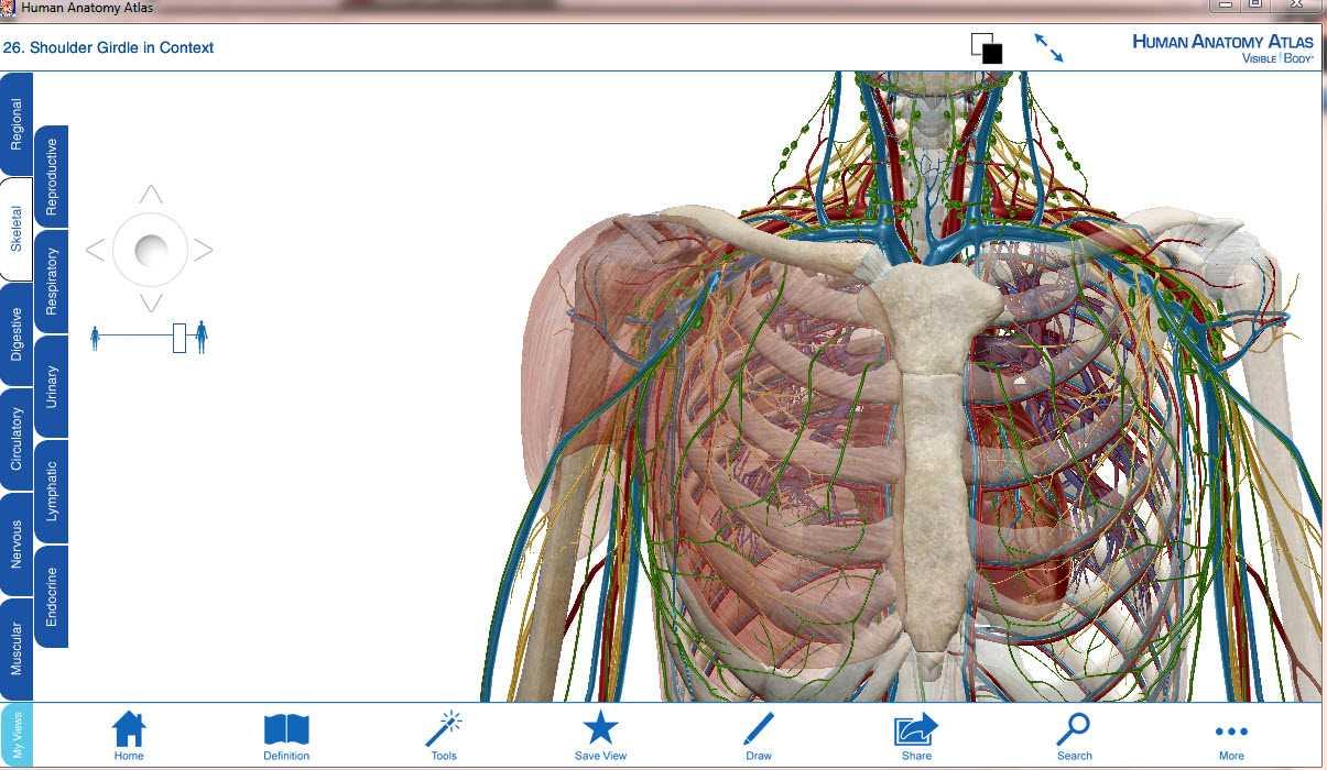 Visible Body Human Anatomy Atlas v7.4.01 en 3D