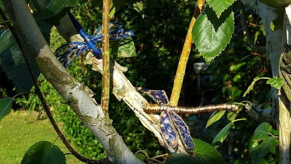libellules de Juju