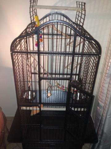 nice cheap latest cheap for sale forum-perroquet.com • Conseil par rapport à la cage de mon ...