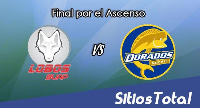 Lobos BUAP vs Dorados de Sinaloa en Vivo – Ida Final por el Ascenso – Online, Por TV, Radio en Linea, MxM