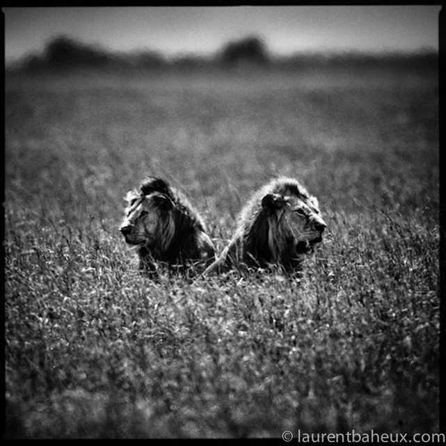 © Laurent Baheux