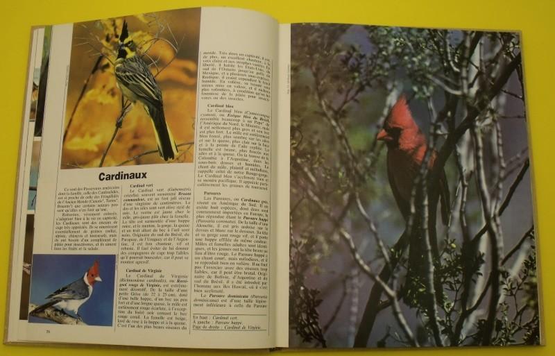 Larousse des oiseaux de cage et de voli re races for Maladie poules perte plumes