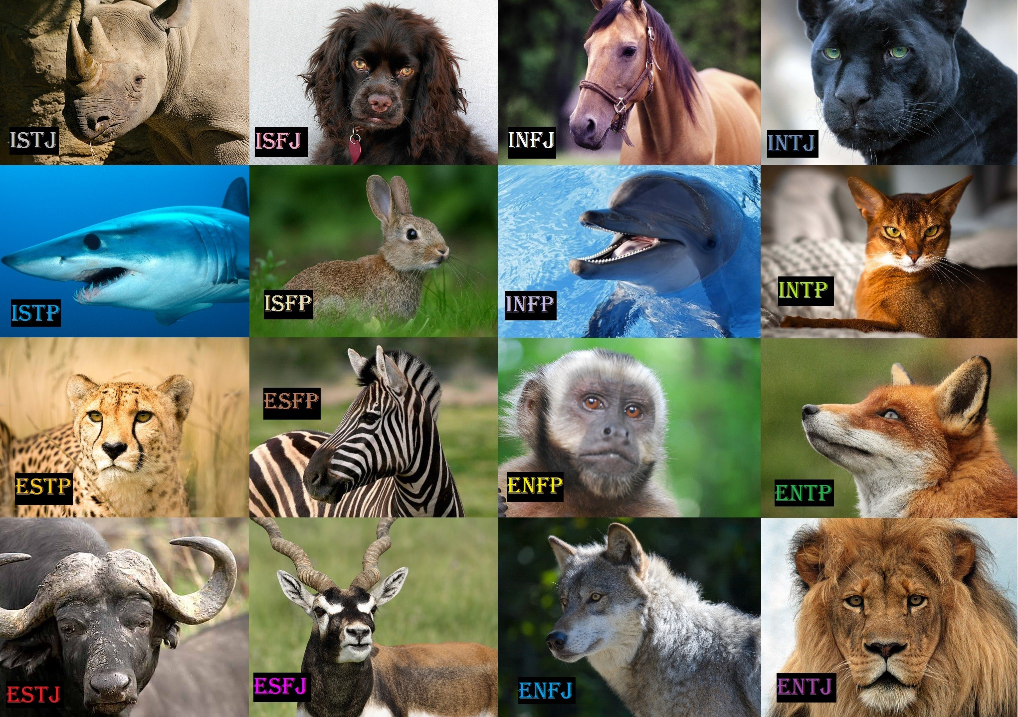 Myers briggs infp animal