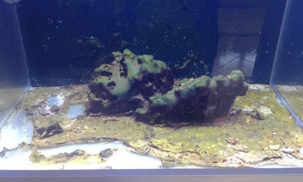 a dan z ye nano akvaryum kurulumu yeni baslayanlar mercan dunyasi