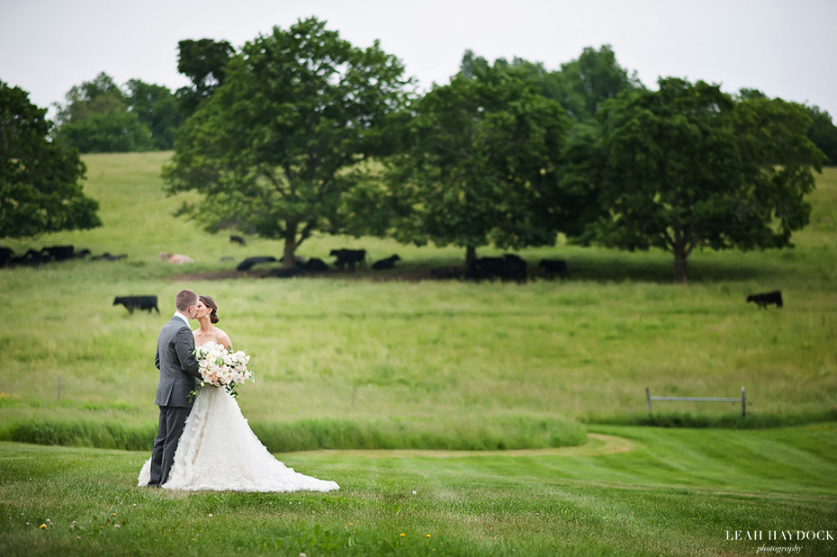 Wedding pictures at The Barn at Gibbet Hill, bride and groom kissing in field with cows